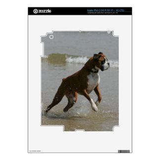 Perro del boxeador en agua pegatina skin para iPad 3