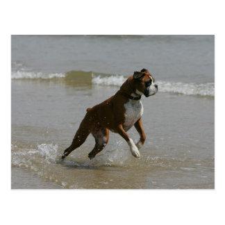 Perro del boxeador en agua tarjetas postales