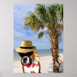 Perro del boxeador en el poster de la playa