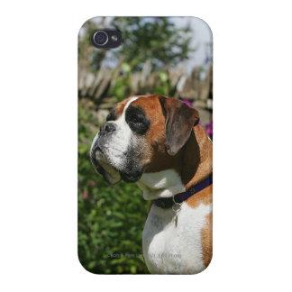 Perro del boxeador en las flores iPhone 4/4S carcasa