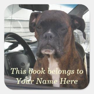 Perro del boxeador en Seat de conductor Pegatina Cuadrada