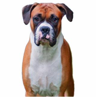 Perro del boxeador escultura fotográfica