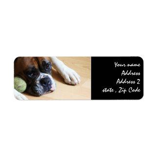 Perro del boxeador etiqueta de remitente