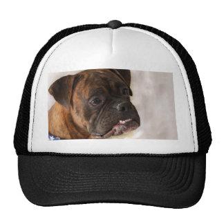 Perro del boxeador gorros bordados