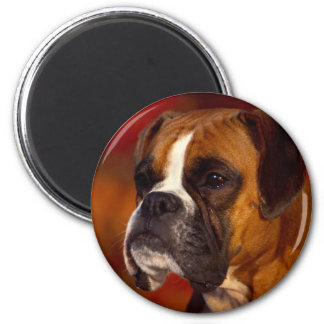 Perro del boxeador imán redondo 5 cm