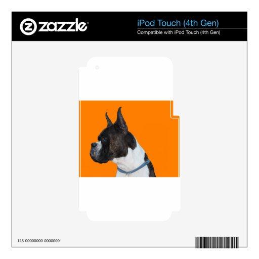 Perro del boxeador iPod touch 4G calcomanías