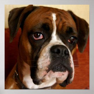 Perro del boxeador poster