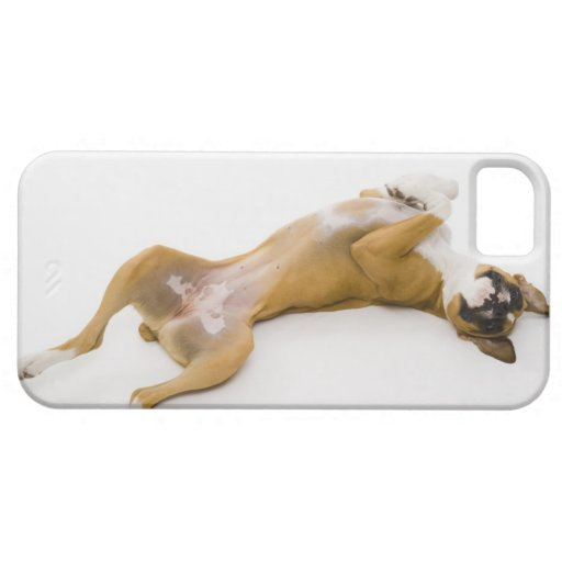 Perro del boxeador que pone en ella detrás en el p iPhone 5 fundas