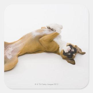 Perro del boxeador que pone en ella detrás en el pegatina cuadrada