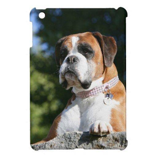 Perro del boxeador que pone en una roca