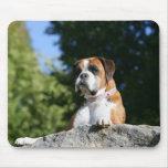 Perro del boxeador que pone en una roca alfombrilla de ratones