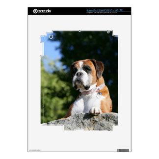 Perro del boxeador que pone en una roca iPad 3 skin