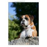 Perro del boxeador que pone en una roca tarjeta de felicitación
