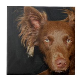 Perro del chocolate azulejo cuadrado pequeño
