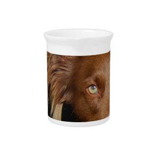 Perro del chocolate