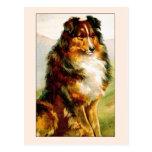 Perro del collie del vintage postales