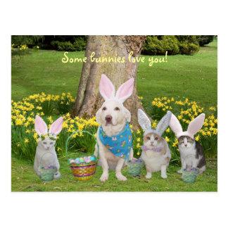 Perro del conejito con los gatos del conejito postal