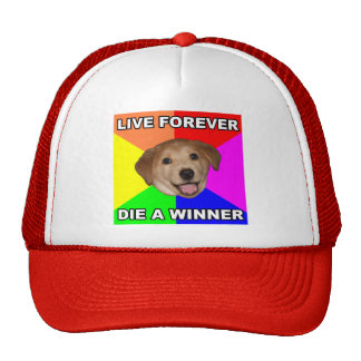 Perro del consejo vivo para siempre gorro