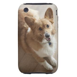 Perro del corgi del Pembroke Galés que miente en iPhone 3 Tough Cobertura