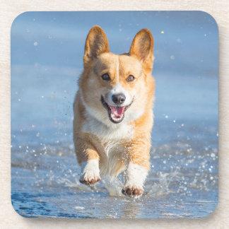 Perro del Corgi Galés del Pembroke que corre en la Posavasos