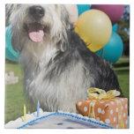 Perro del cumpleaños azulejo cuadrado grande
