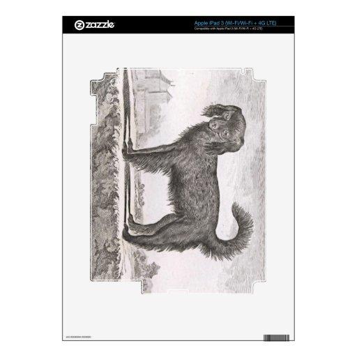 Perro del dibujo del artista del vintage en blanco iPad 3 skin