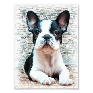 Perro del dogo francés fotografía