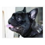 Perro del dogo francés postal