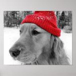 Perro del esquí póster
