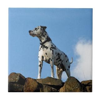 Perro del galán azulejo cuadrado pequeño