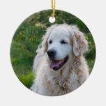 Perro del golden retriever, amo el ornamento del ornatos