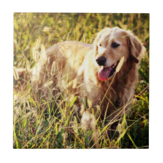 Perro del golden retriever azulejo cerámica