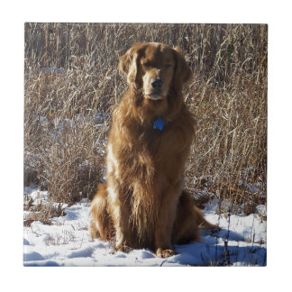 Perro del golden retriever azulejo cuadrado pequeño