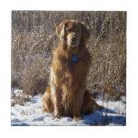 Perro del golden retriever azulejos cerámicos