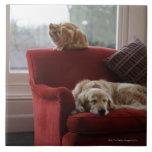 Perro del golden retriever con el gato de tabby de azulejo ceramica