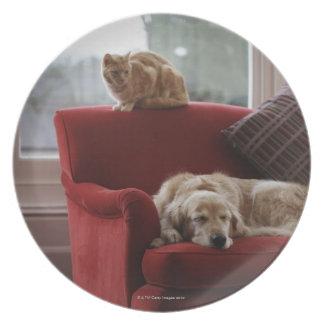 Perro del golden retriever con el gato de tabby plato de cena