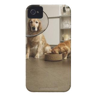 Perro del golden retriever con la sentada médica d iPhone 4 carcasas