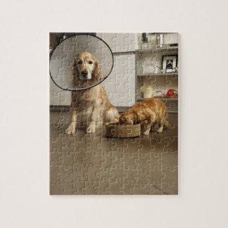 Perro del golden retriever con la sentada médica d puzzles
