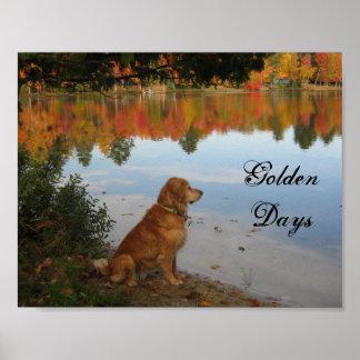 Perro del golden retriever de las hojas de otoño póster