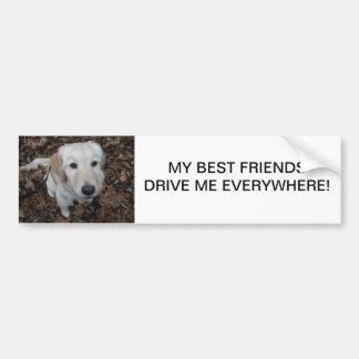 Perro del golden retriever - los colores de la caí pegatina de parachoque