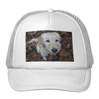 Perro del golden retriever - los colores de la caí gorras de camionero