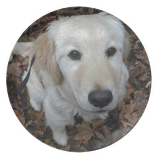 Perro del golden retriever - los colores de la caí platos de comidas