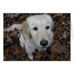 Perro del golden retriever - los colores de la tarjeta de felicitación