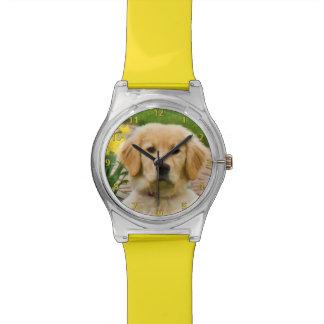 Perro del golden retriever, narcisos amarillos reloj