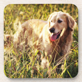Perro del golden retriever posavasos de bebidas