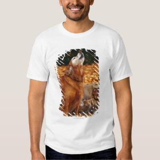 Perro del golden retriever que grita en la polera