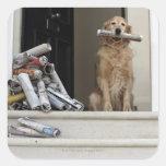 Perro del golden retriever que se sienta en la pegatina cuadrada