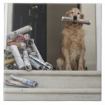 Perro del golden retriever que se sienta en la pue azulejo cuadrado grande