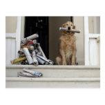 Perro del golden retriever que se sienta en la pue postal