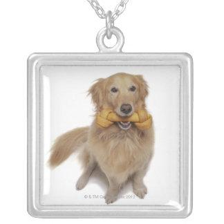 Perro del golden retriever que sostiene el hueso collar plateado